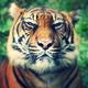 tiger87's avatar